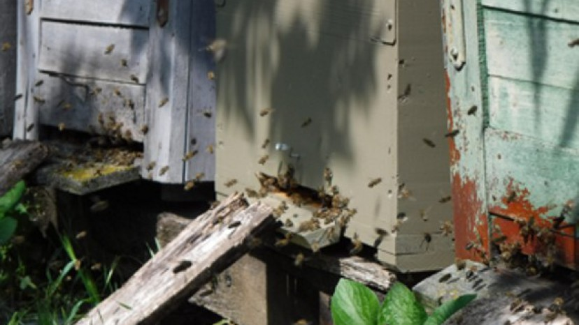 Méhbarát kaptárfesték